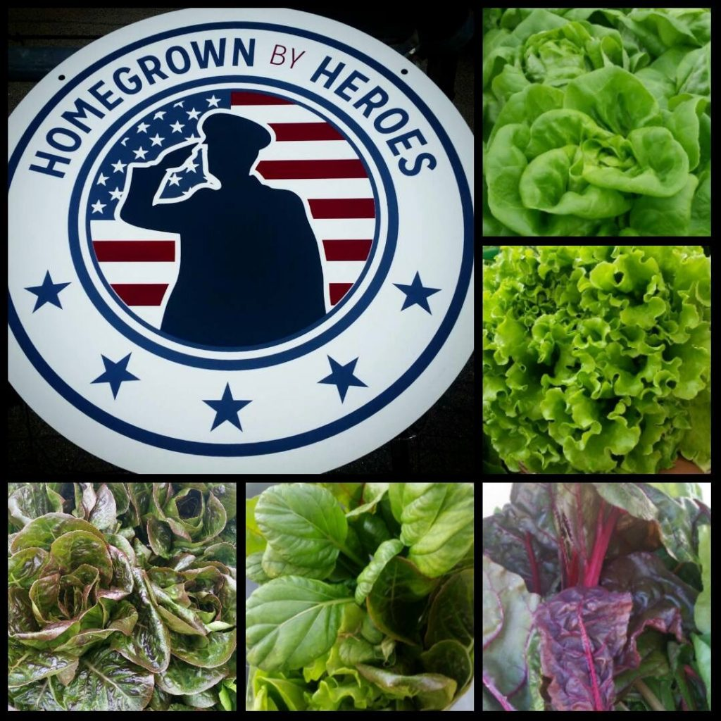 Some of the produce grown by US Navy veteran Endeavour Shen and crew on Sundial Farms in San Diego, CA.