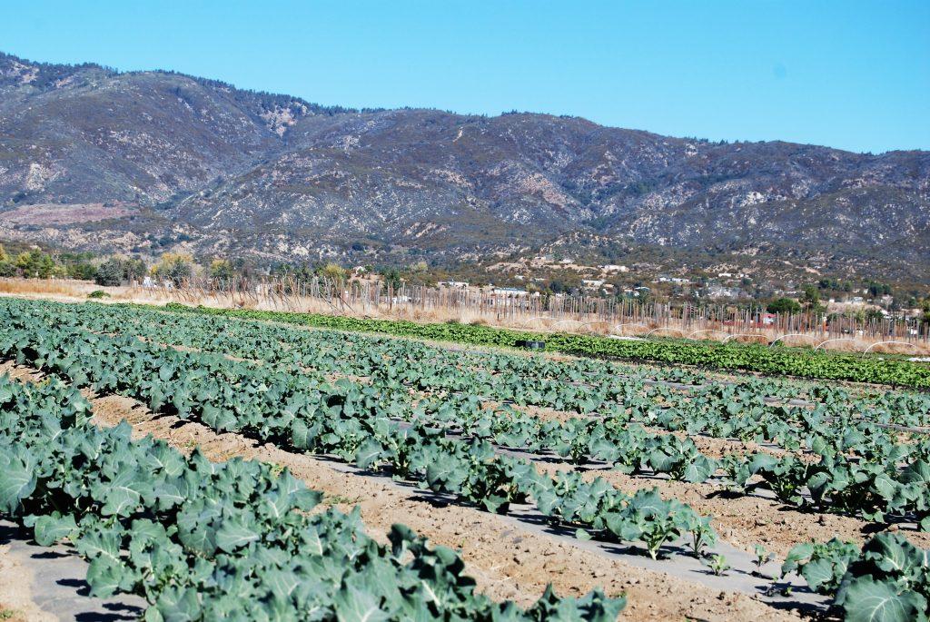 Sage Mountain Farm - Daily Harvest Express San Diego CSA