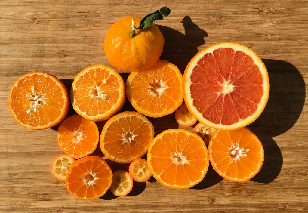 Organic citrus - Rancho Delo Sol farm in Jamul, CA