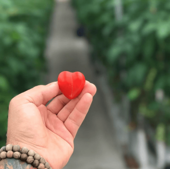 A little taste of love from Dassi Family Farm. (That's a tomato in case you're wondering!)