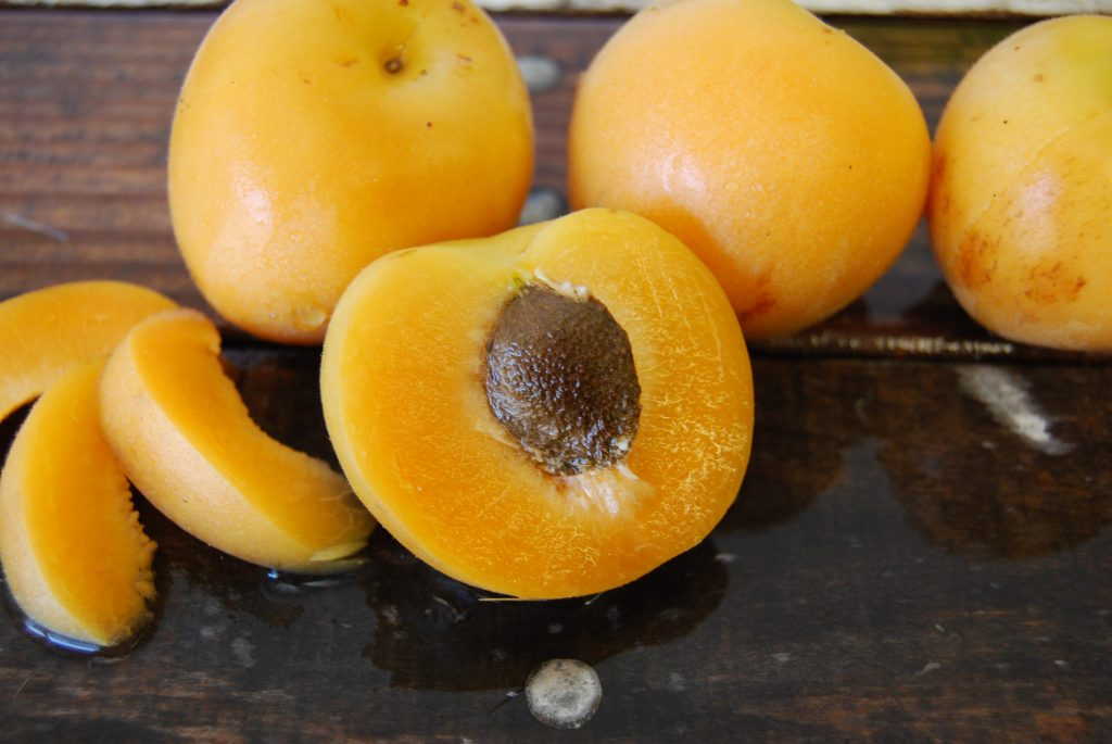 Apriums from Sweet Tree Farms