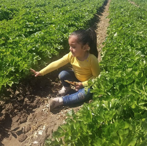 Gaytan Family Farm - child in celery row