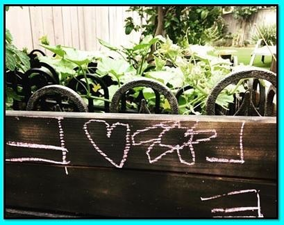 EVOL, Luca's message for the plants.