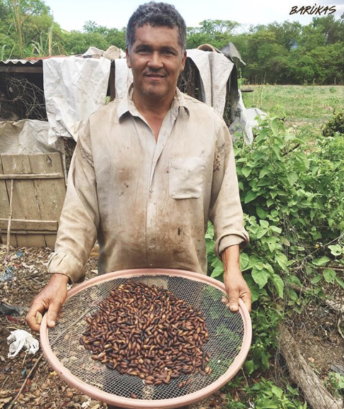 A local barukas nut farmer.